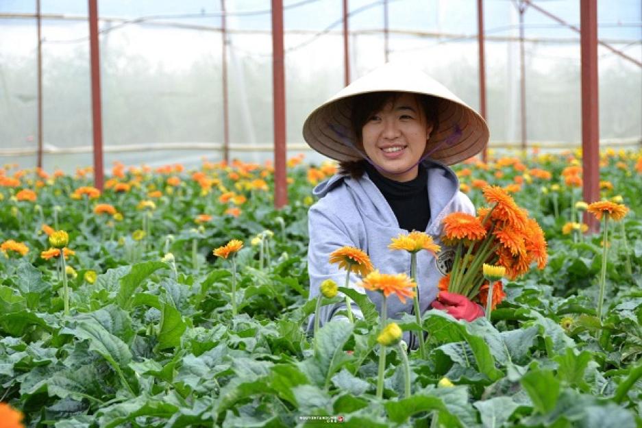 Xuất khẩu lao động Nông nghiệp Nhật