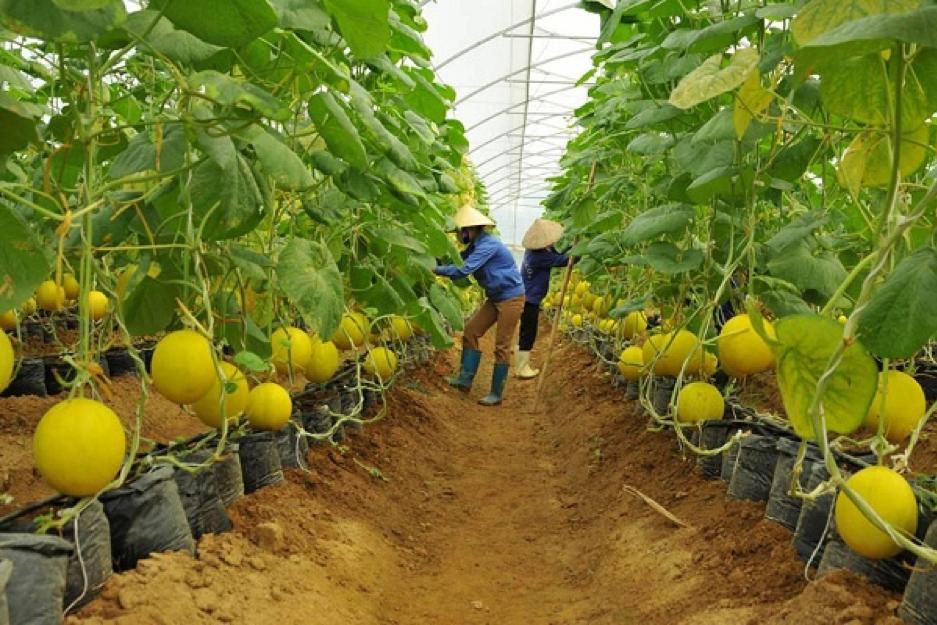 Xuất khẩu lao động ngành Nông nghiệp Nhật